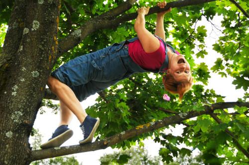 Viima kiipesi puuhun